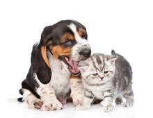 Basset Hound Puppy Wants To Bi...