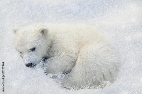 Deurstickers Ijsbeer Белый медвежонок.