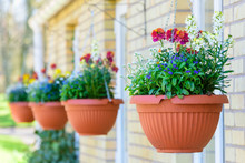 Row Of Hanging Flowerpots With Lovely Fresh Flowers.