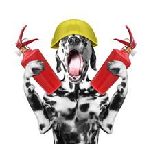 Dog Firefighter Screams Signal...