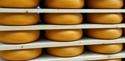 Obraz na Szkleemmental cheese during ripening in the dairy