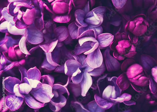 Garden Poster Floral Lilac flowers background