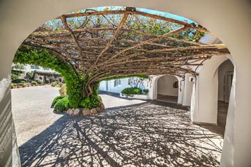 Fototapeta Architektura Tree arbor in Poltu Quatu