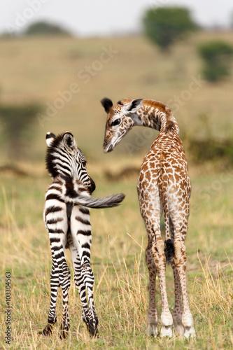Foto op Aluminium Giraffe Freunde in der Serengeti