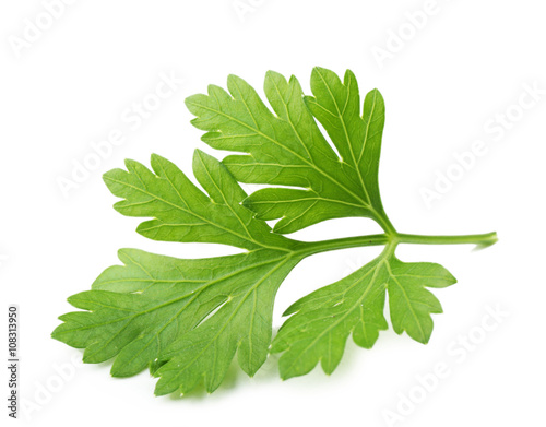 Fotomural  Fresh parsley isolated on white