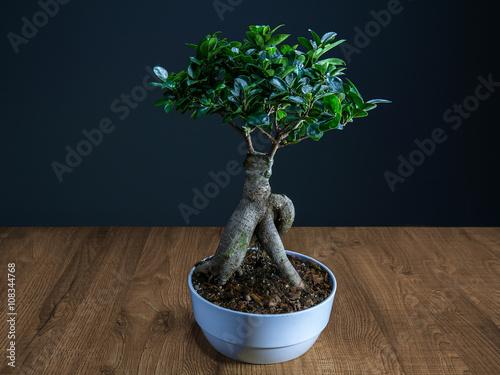 Bonsai su piano di legno