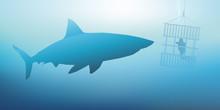 Requin - Plongeur