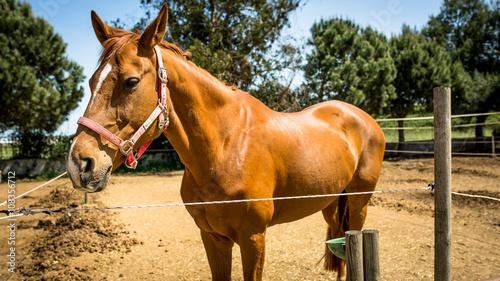 Fototapeta  goodbye horses