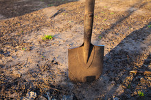 Garden Old Shovel Stuck In The Ground.