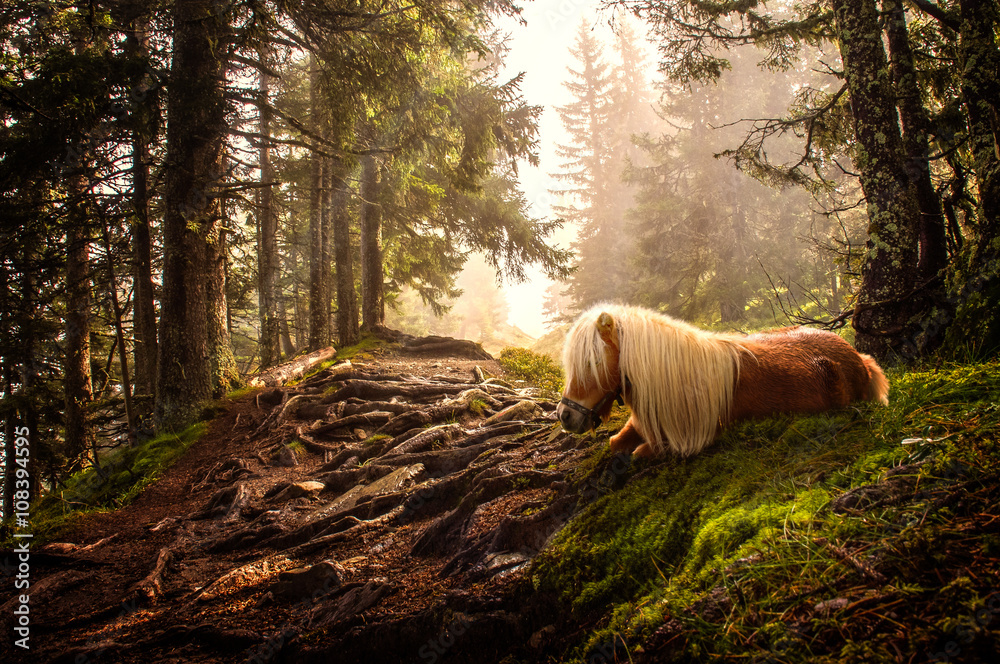 Fotografie, Obraz shetland pony in forest