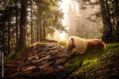 Photo  shetland pony in forest