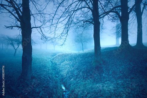 Mystical blue colored foggy fairy tale trees fantasy landscape.