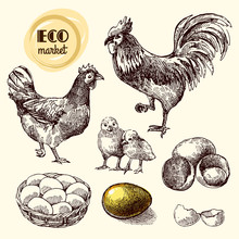 Eco Farm Chicken