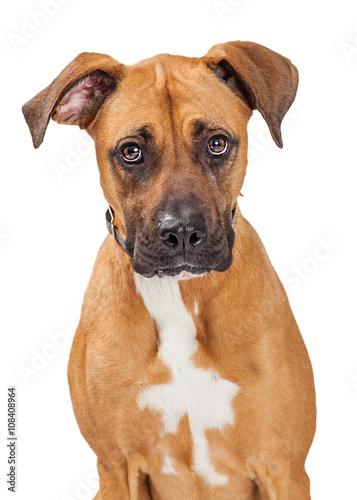 Duży mieszaniec pies smutny wyraz