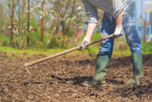 Man Hoeing Vegetable Garden Soil