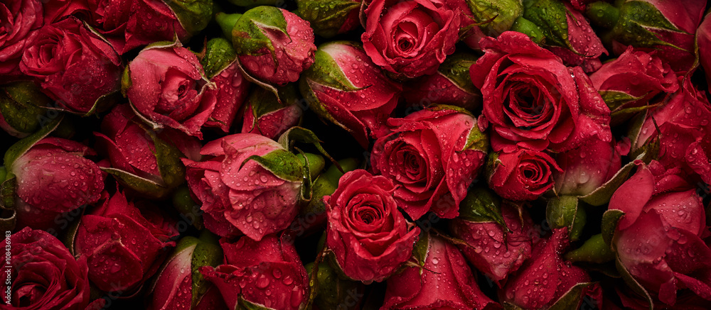 Fototapety, obrazy: Roses with drops of water