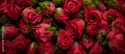 Tuinposter Bloemen Roses with drops of water
