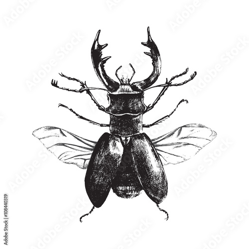 Hand drawn deer beetle Poster