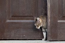 Cat Leaves Home, Cat Open And Entering Into A Door