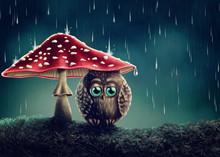 Little Owl Under Mushrooms