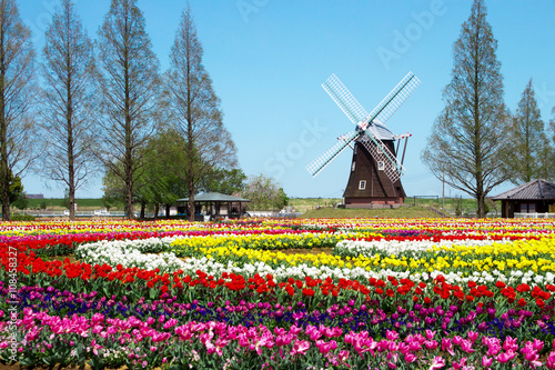 Photographie  Un champ de tulipes avec un moulin à vent