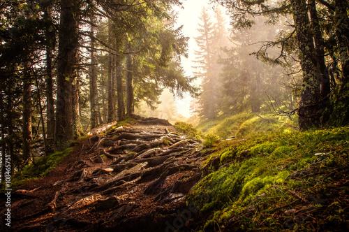Photo Stands Road in forest Zauberwald