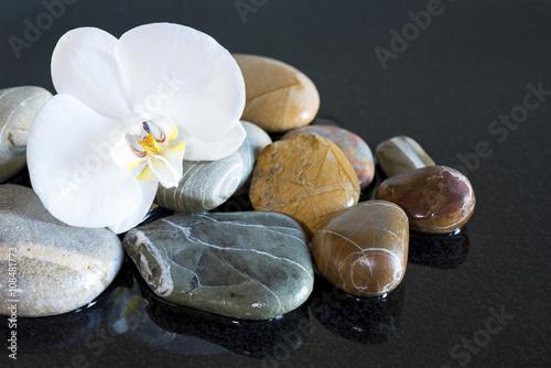orchidea-i-kamienie-na-czarnym-tle