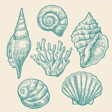 Sea Shell. Set Color Engraving Vintage Illustrations. Isolated On  White Background.