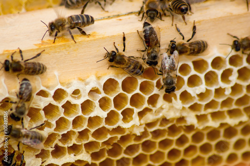 Poster Bee The beekeepers work.
