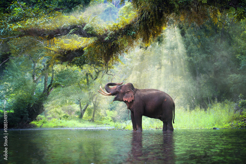 Photo Stands Olive Wild elephant in the beautiful forest at Kanchanaburi province in Thailand, (with clipping path)