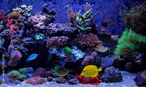 Poster Sous-marin Dream Exotic Aquarium