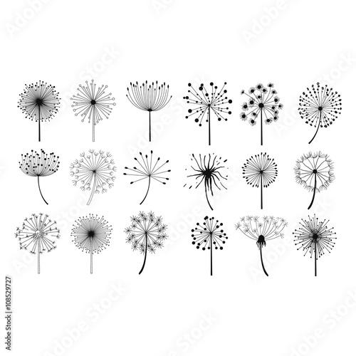 Fototapeta Dandelion Fluffy Seeds Flowers Set obraz