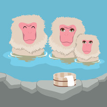 Cute Snow Monkey Japanese Macaques Family Having Hot Springs Bath At Traditional Onsen