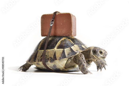 Spoed Foto op Canvas Schildpad Turtle with suitcase on a back. Selective Focus.