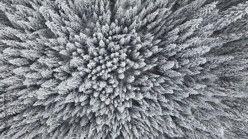 zamarzniety-las-sosnowy-z-powietrza