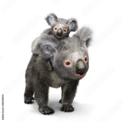 Fotobehang Koala Koala bear and her baby looking toward the camera on a white background. 3d rendering