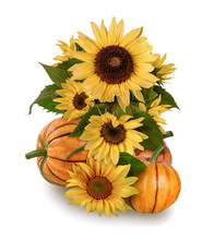 Pumpkins And Sunflowers On A White Background
