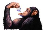 Małpa wypić filiżankę kawy. Akwarela ilustracja. - 108593796