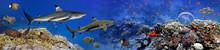 Panorama Of Marine Species