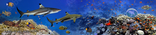 Panorama of marine species