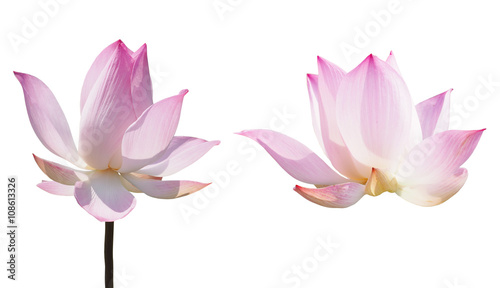 Poster de jardin Nénuphars pink lotus waterlily
