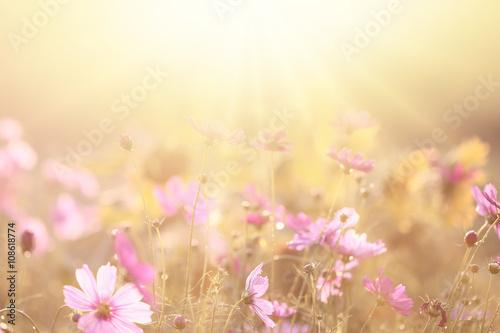 Poster Fleur spring background