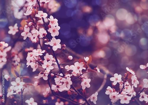 okwitniecia-drzewo-nad-natury-tlem-wiosna-kwiatami-wiosny-tlem-naturalnym-bokeh-