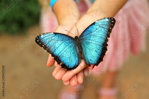 Valokuva  Blue Morpho Butterfly in girls hands