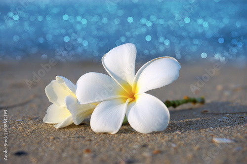 Foto op Plexiglas Frangipani two plumeria flowers on the sand on the beach
