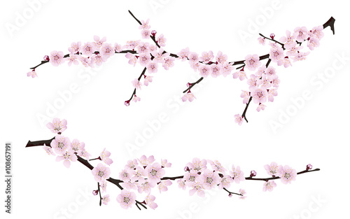 Photo  Set of spring blooming tree branches, tree branch with pink flowers