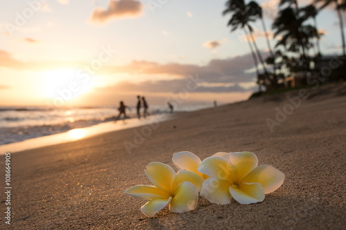 Photo Stands United States Plumeria flowers on the shore on sunset beach with golden sunlight and people on background