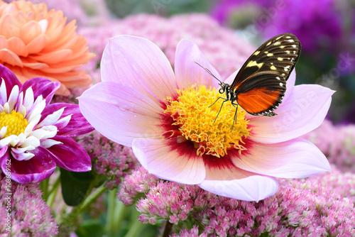 fototapeta na drzwi i meble Schmetterling 209