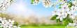 canvas print picture Frühlingsparadies mit weißen Blüten, Sonne und blauem Himmel,