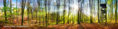 Poster Chasse Panorama von Wald mit Sonne im Frühling